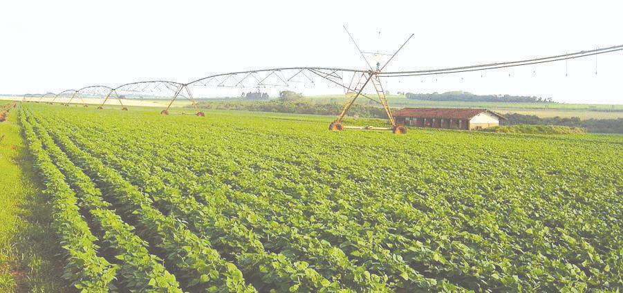 Preços agropecuários: alta de 0,83% no fechamento do mês de agosto