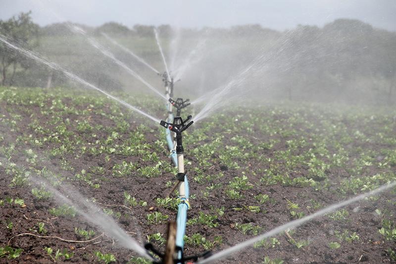 polos de agricultura irrigada vão gerar emprego, afirma Bolsonaro