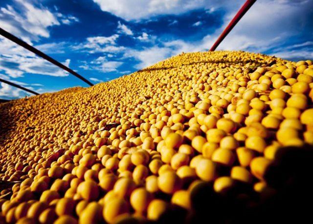 Cultura da soja no Brasil exige reflexão