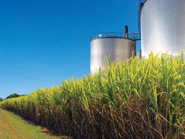 Etanol: hidratado sobe 1,6% e anidro avança 2,48% nas usinas de São Paulo